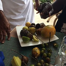 Chefs tasting of local Jamaican fruits