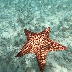 starfish just off the shore